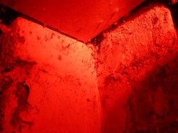 Spidery shadows. They love the red light.